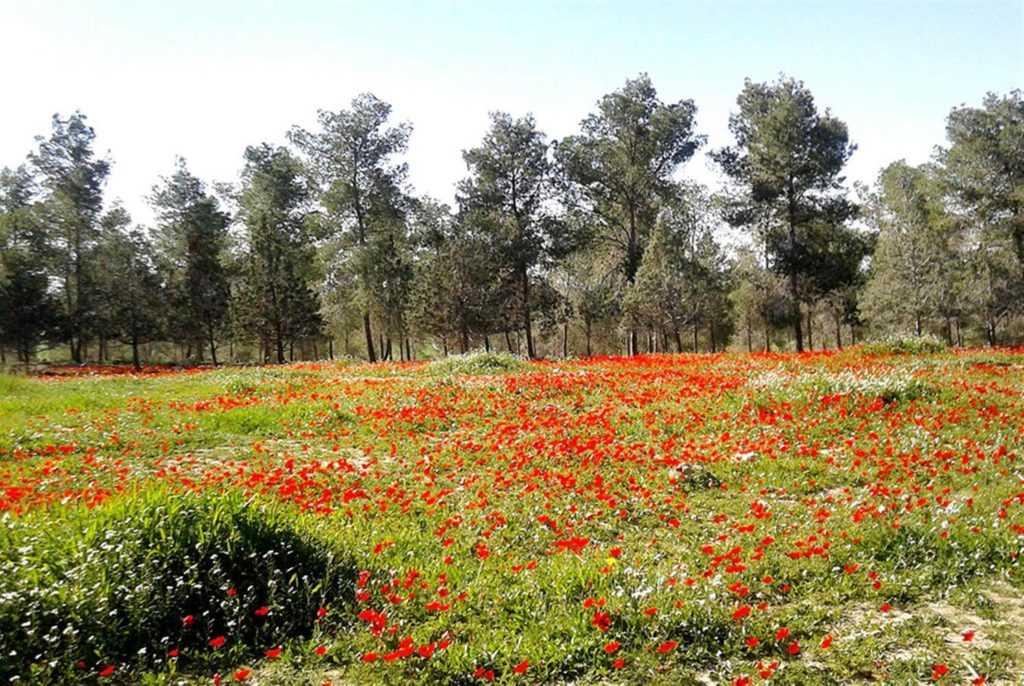 חניון קרואנים יער דבירה